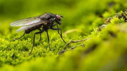 Des pièges à phéromones pour les papillons et les mouches