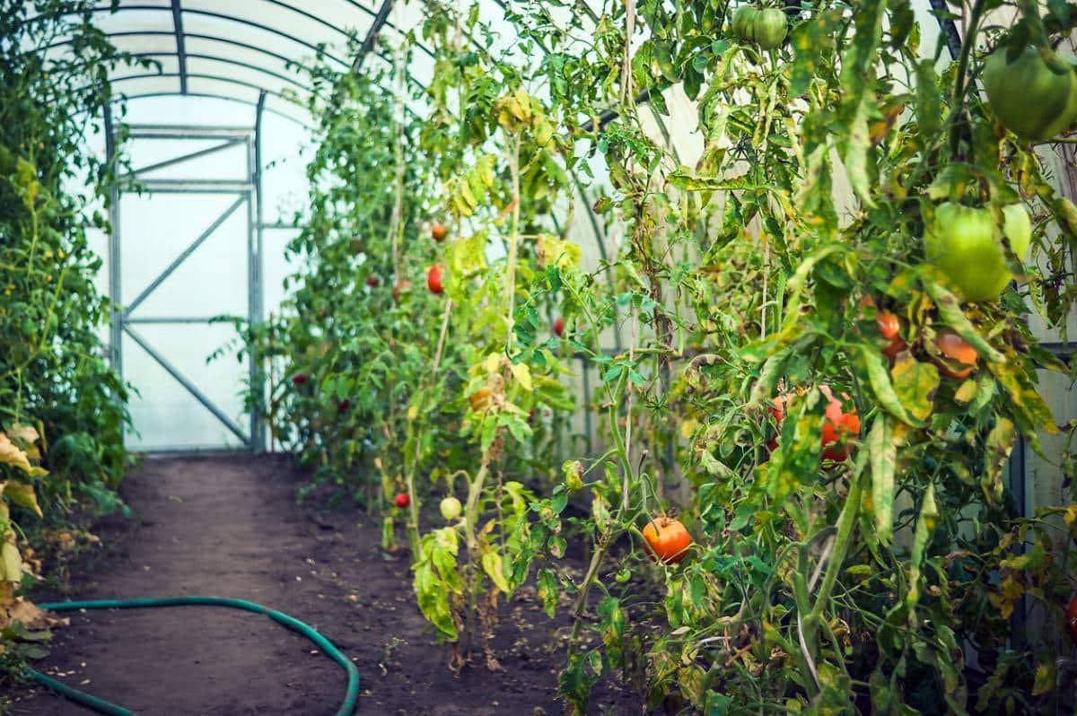 Jardiner toute l'année, c'est possible !