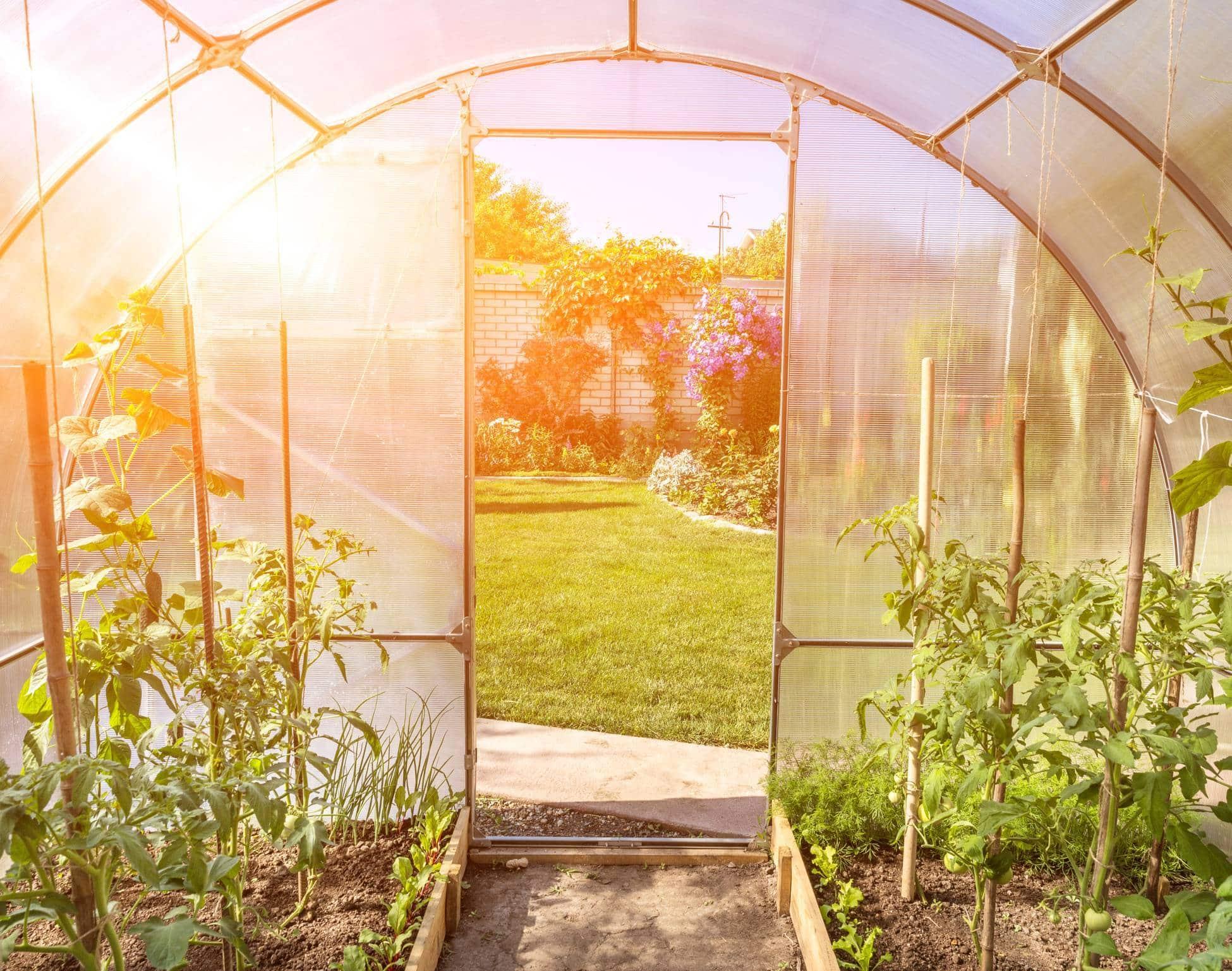 serre tunnel potager jardin